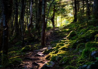 Der Wald