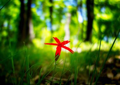 Schönheit des Waldes