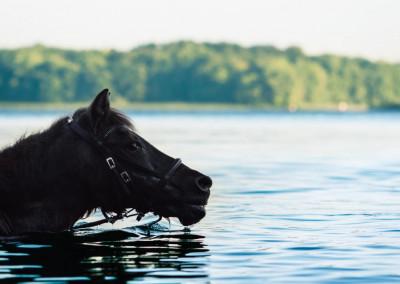 Pferde (12)