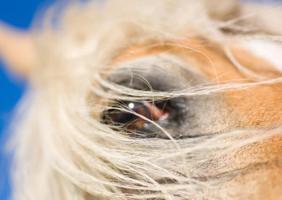Pferde (15)