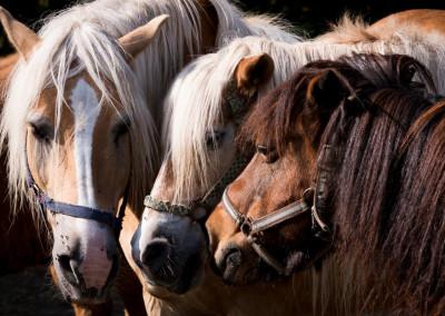 Pferde (16)