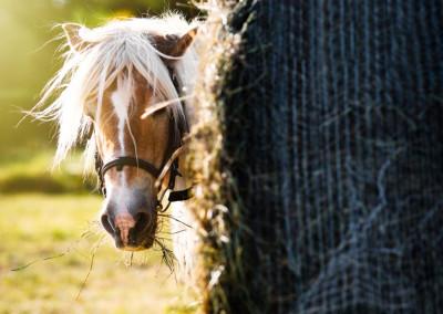 Pferde (18)