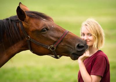 Pferde (8)