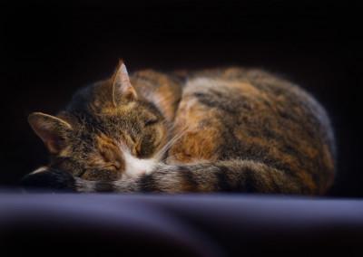 Mietze schläft